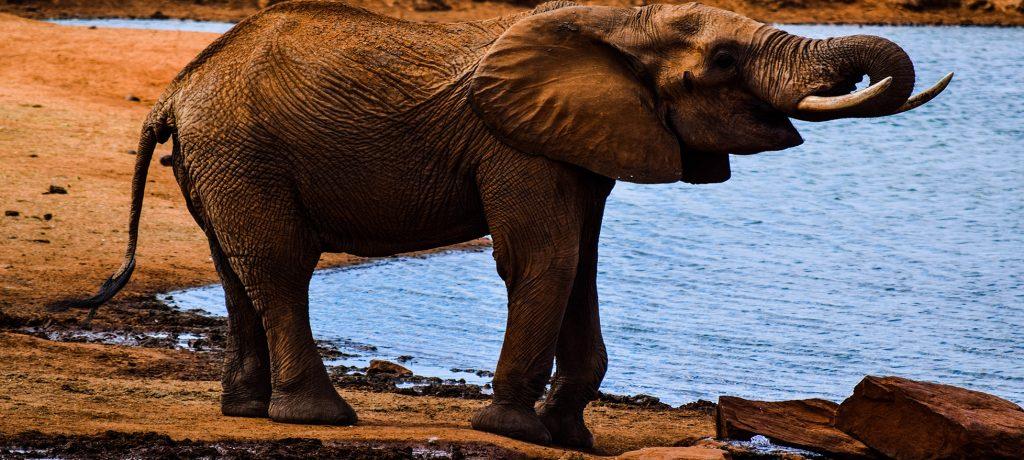 elephantdrinkingwater
